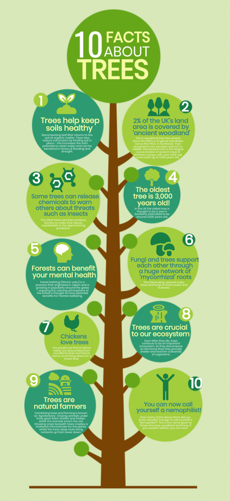 tree facts infographic