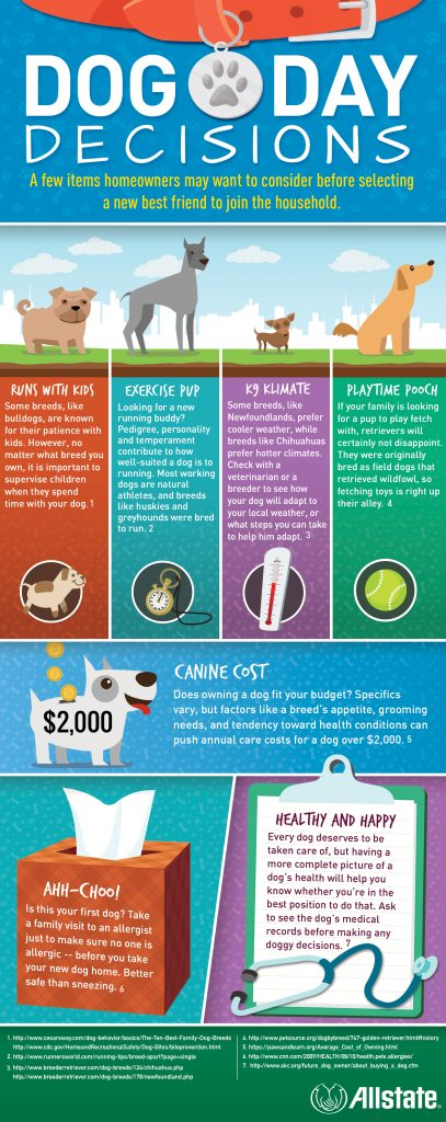 Dog day decisions infographic