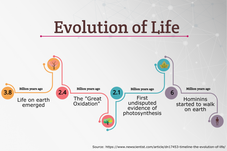 timeline of the evolution of life infographic