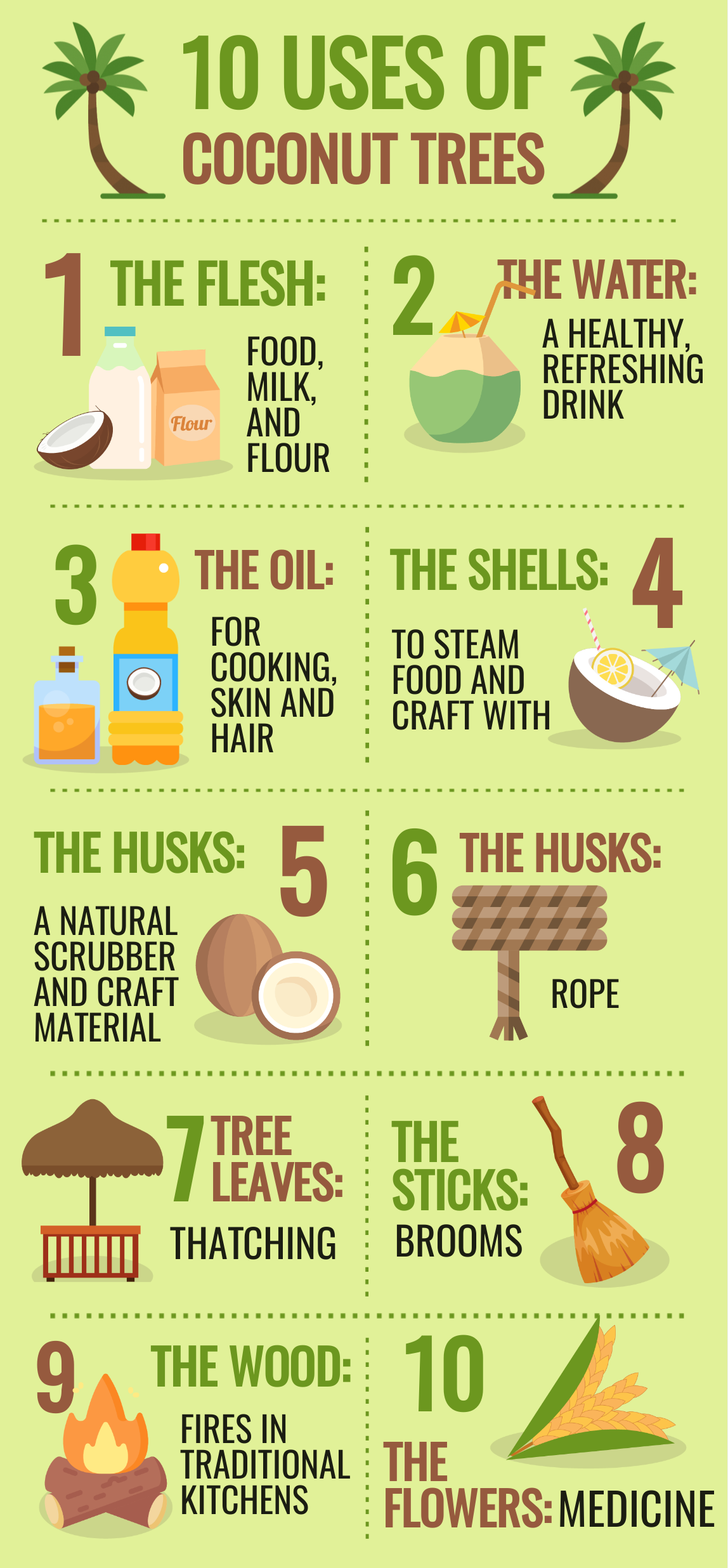 uses of coconut tree infographic