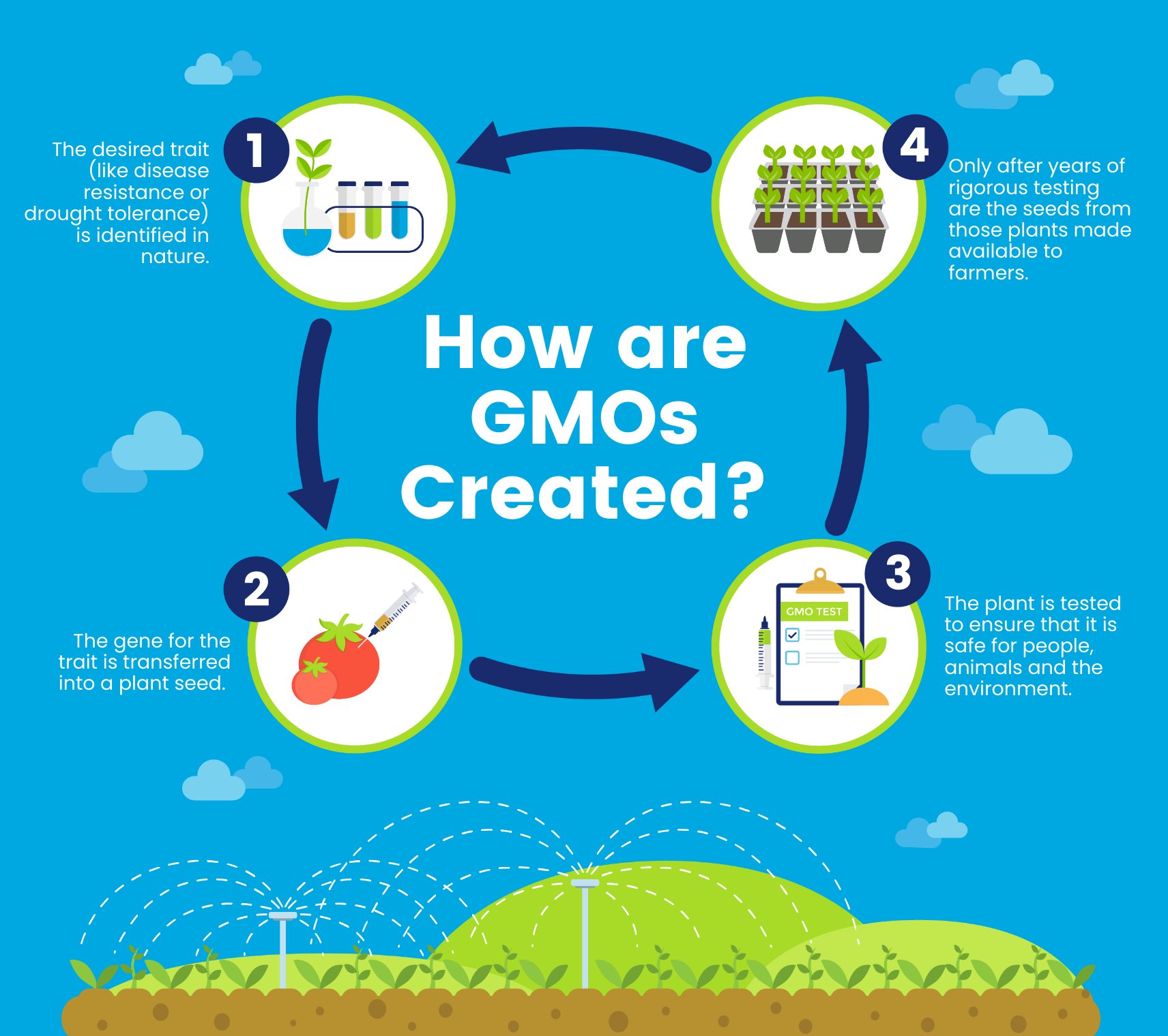 GMO creation infographic template